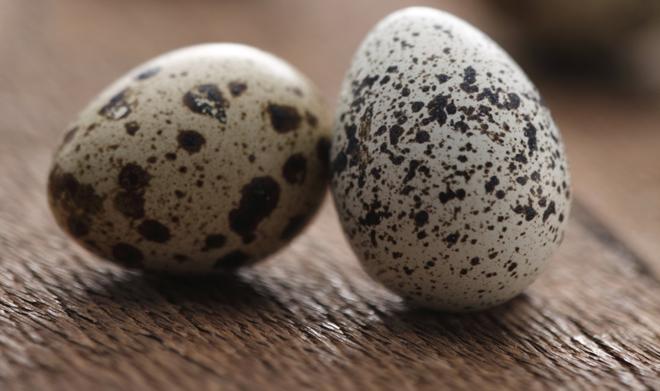 Jajka przepiórcze w sosie koperkowym - na ciepło [WIDEO]